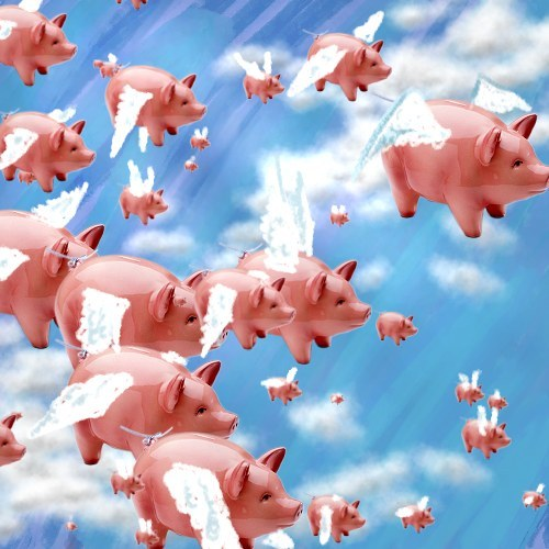 If Pigs Could Fly They Would Have Flight Attendants