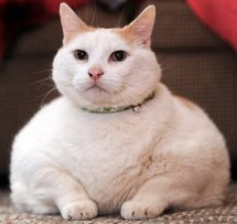 A rather Fat Cat.