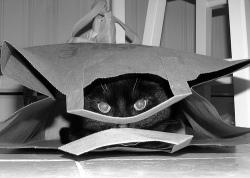 cat.in.bag