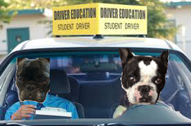 student_drivers