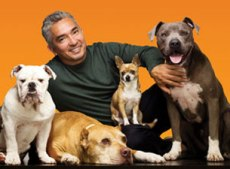 cesar_millan-Dog_Whisperer