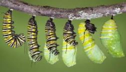 catepillar_death
