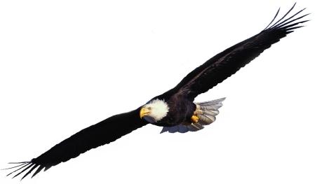 Eagle_soars
